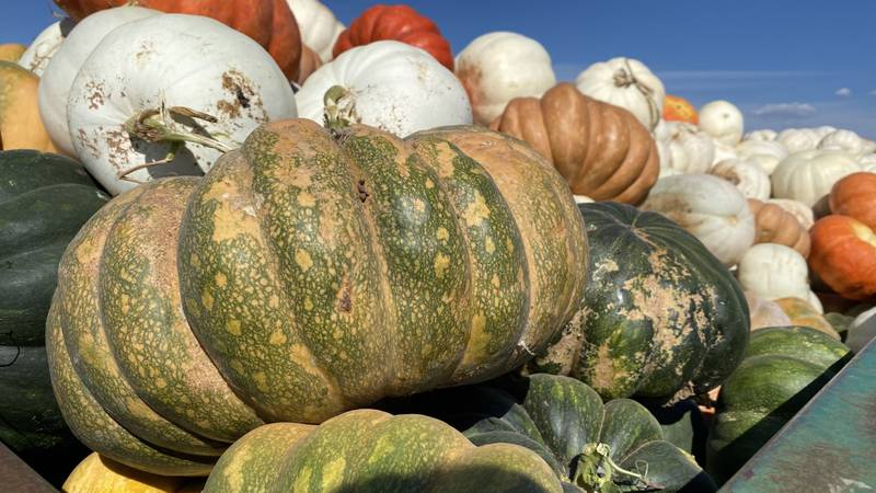 Producers yield quality crop despite challenges.