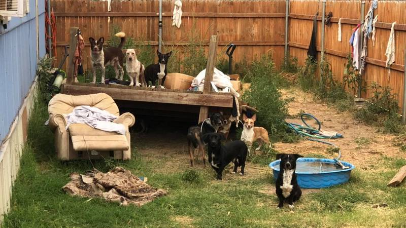 The South Plains SPCA was able to help remove 40 dogs from a residence between Lubbock and...